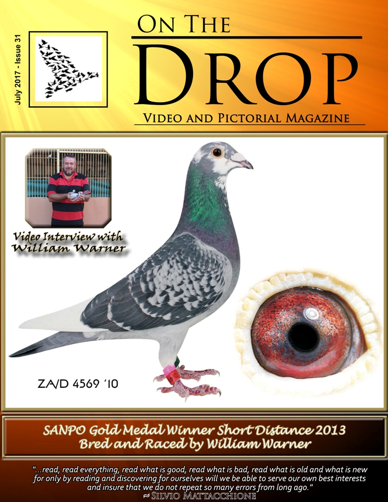 front page issue 31
